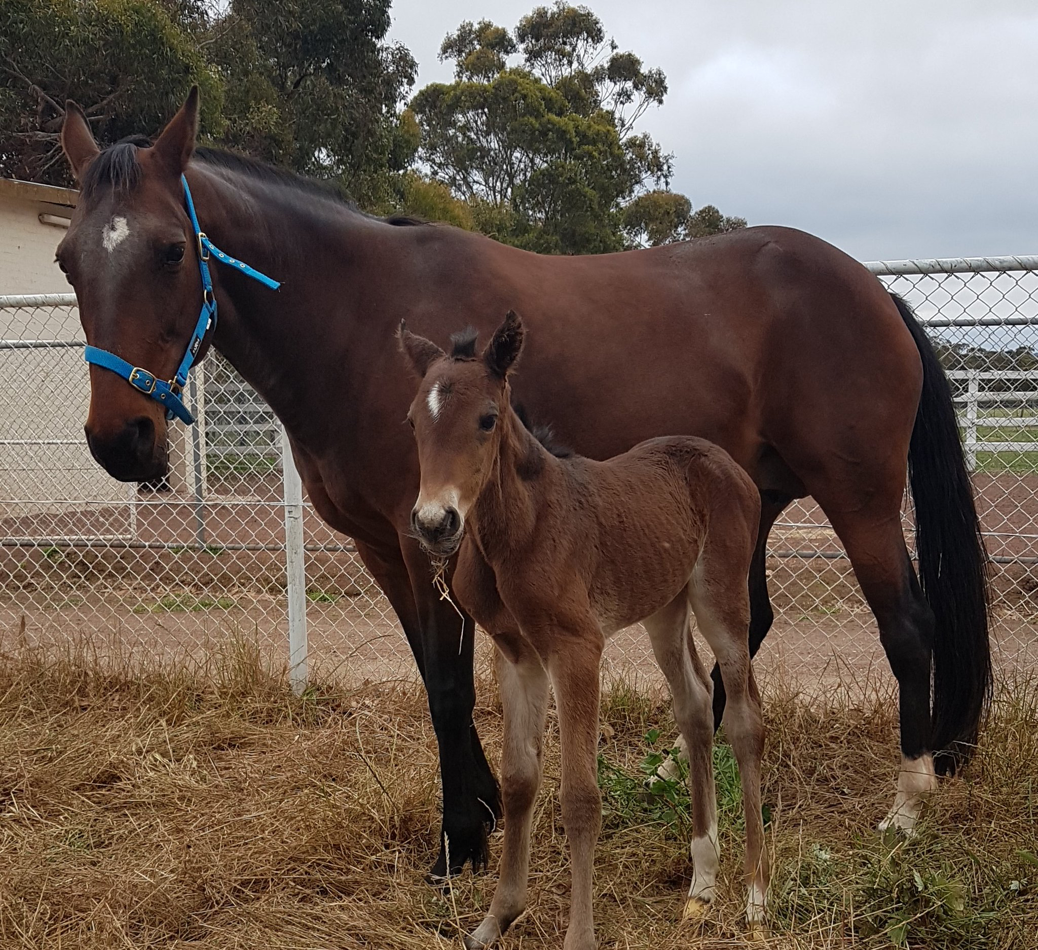 Pixel Perfect has foaled